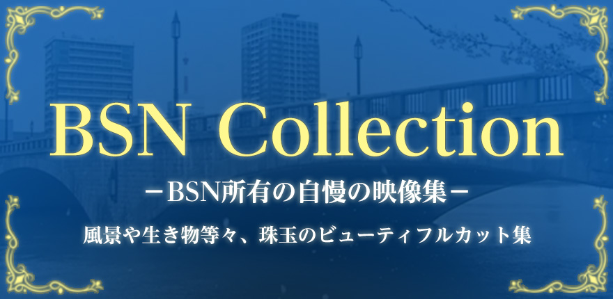 BSN Collectionイメージ