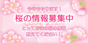 桜の情報募集中