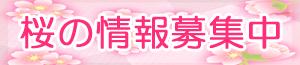 イベント|桜の情報募集中
